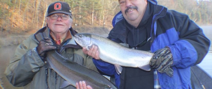 "Muskegon river steelhead ""double"""