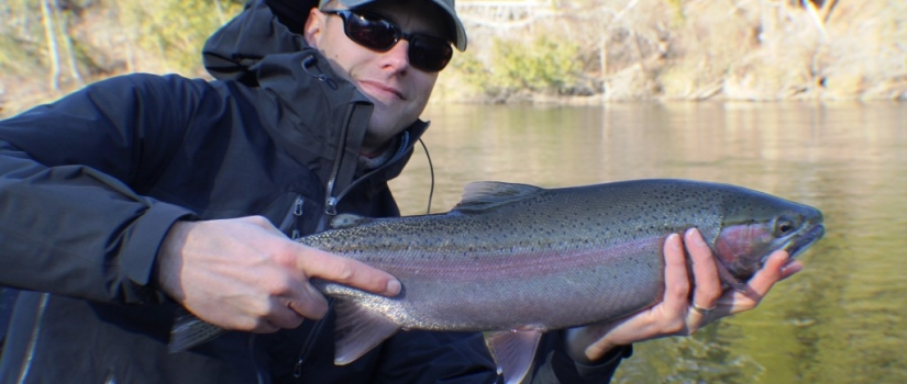 Fall steelhead fishing Muskegon river